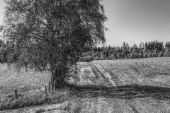 Feldweg mit Baum
