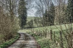 Forstweg im Brachtpetal