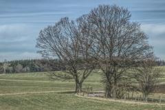 Seitenweg durch Baumgruppe hindurch