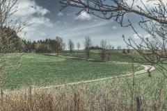Landstraße durch Felder