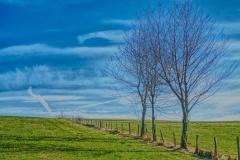 Weidezaun mit Bäumen