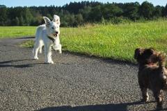 Taffy: Findet neue Freunde